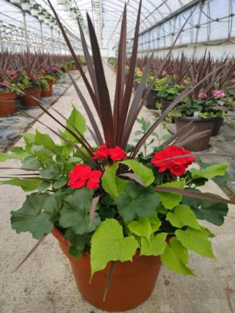 Red Geranium Porch Pot
