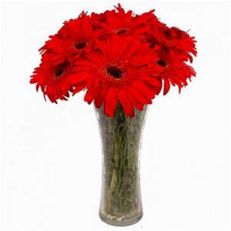 Red Gerberas of Love Vase Arrangement