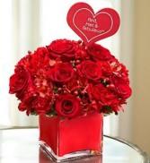 RED HOT &FEBULOUS