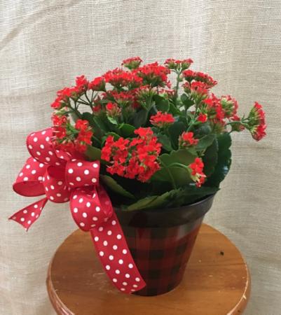 Red Kalanchoe Plant In Seville Oh Seville Flower Gift