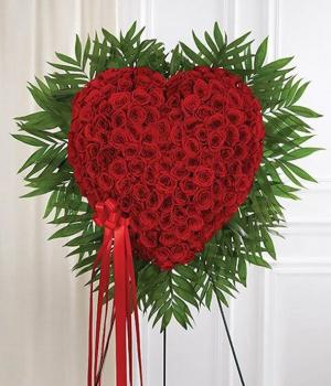 Red Love Forever  in Vacaville, CA | The Red Anthurium