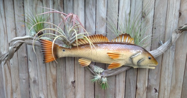 Red Metal Fish on Large Driftwood