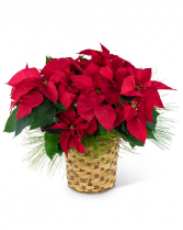 Red Poinsettia Basket Flower Arrangement