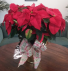 Red Poinsettia Christmas Plant