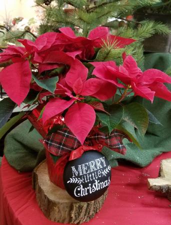 Red Poinsettia & Ornament Plant