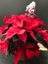 red pointsettia plant basket