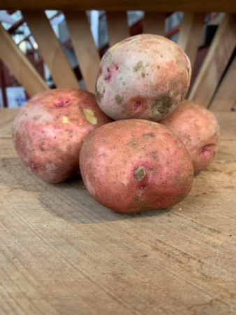Red Pontiac Seed Potatoes