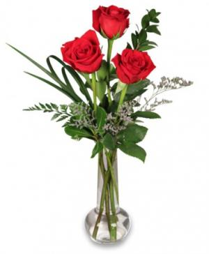 Red Rose Bud Vase 3 Premium Roses in North Adams, MA | MOUNT WILLIAMS GREENHOUSES INC