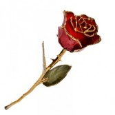 Red Rose Trimmed In 24 ct gold Displayed in a Gift Box