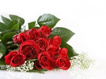 CLASSIC RED ROSES Cut flowers - no vase