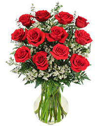 Red Roses and Wispy White Accent Flowers