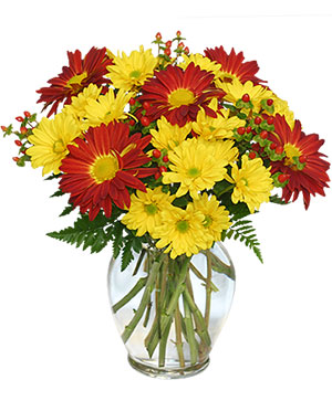 RED ROVER & YELLOW DAISY Bouquet of Flowers in Biloxi, MS | Rose's Florist