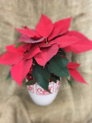 Red Traditions  in Easton, CT | Felicia's Fleurs