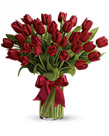 red  tulips all around