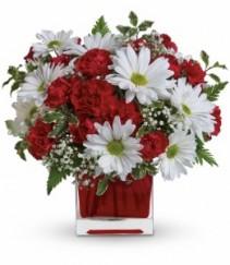 Red & White Delight  TEV27-2B