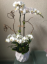 PINKS IN BLOOM  Spring Flower Arrangement