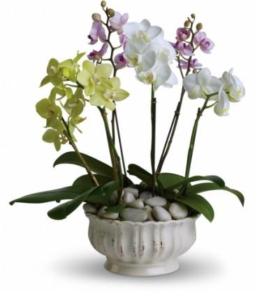 Regal Orchids EN-4P
