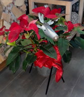 Reindeer Planter with Poinsettia