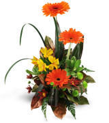 Rise Beyond Fall arrangement