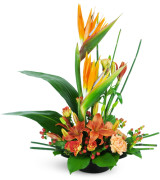 Rise High - 339 Arrangement