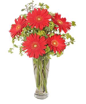 RITZY RED GERBERAS Flower Arrangement in Saskatoon, SK | QUINN & KIM'S FLOWERS