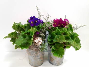 Robin's Caddy Blooming  Serene Garden Collection
