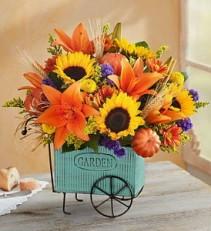 Roma florist  Harvest Garden Cart