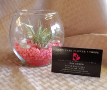 Romantic Air Plant Bubble Bowl