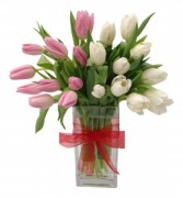 Tulip Duo Arrangement
