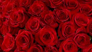 Romantic Valentine's Day Arrangement in Boca Raton, FL | Flowers of Boca