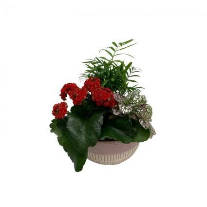 Rome Planter - Ceramic Plant