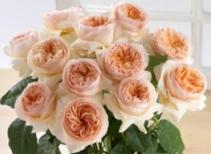 Romeo and Juliet i Dozen Garden Roses