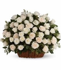 Rose Abundance  Roses