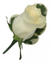 Rose  B8-15 Boutonniere