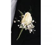 Rose Boutonniere with Baby's Breath T88-4
