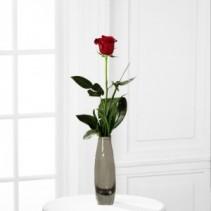 Rose Bud Vase Rose