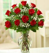 Rose Elegance Premium Long Stem Red Roses One Dozen
