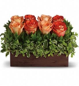 Rose Garden Roses in Prairie Grove, AR | FLOWERS-N-FRIENDS