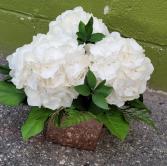 Rose Gold Hydrangea