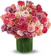 Rose Rapture Roses