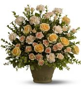 Rose Rememberence SY171