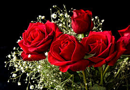 Rose Special - Cash and Carry ( pick up only)  in Richmond, VA | WG Miller Creations Florist & Gift Shop