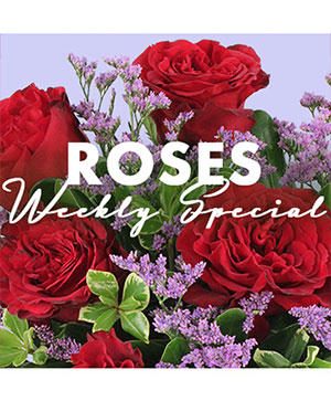 Rose Special Designer's Choice in Corner Brook, NL | The Orchid