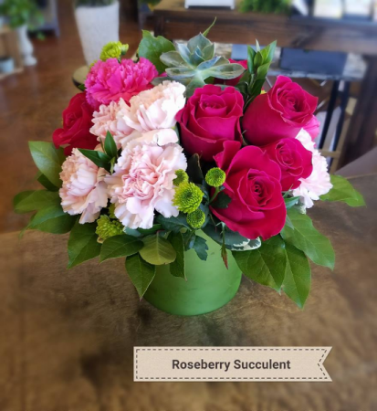 Roseberry Succulent Birthday