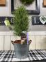 Rosemary Tree Plant