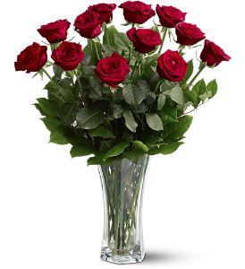 Dozen Roses fresh flowers