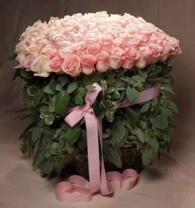 Roses Hadge Design