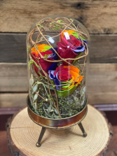 Roses in glass dome cloche  Preserved