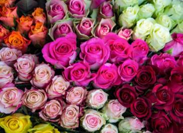 Roses Roses Roses Arrangement