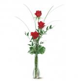 ROSES THREE RED